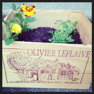 Yet another benefit of drinking - flower boxes!