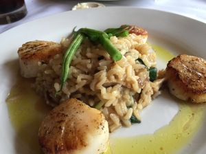 Scallops with ramp risotto